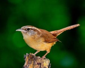 bird-1398379_640